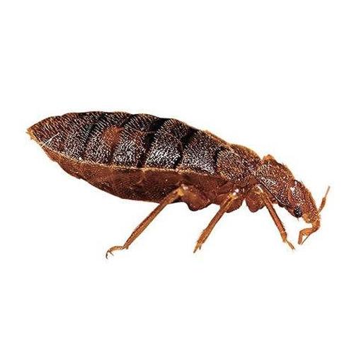 中山除四害家装中如何预防白蚁的方法
