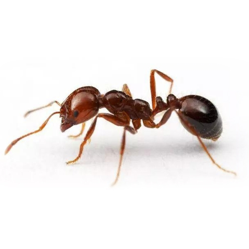 中山白蚁防治的几大好处