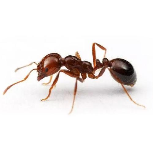 控制中山白蚁,确保施工质量和安全