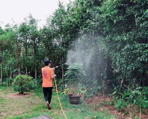 中山白蚁防治主要包括两个方面